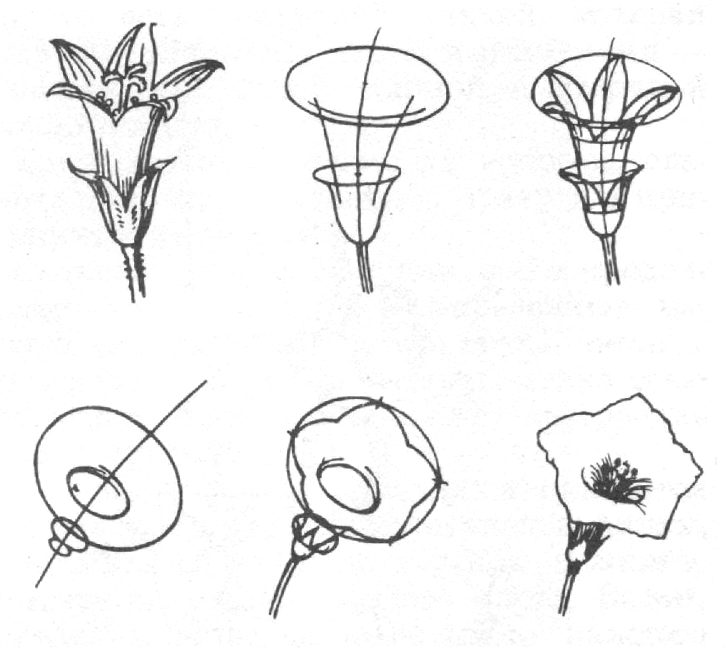 Схема построения цветка