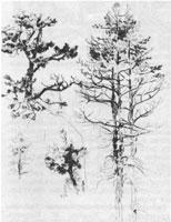 2. Д. Кардовский. Зарисовка «Сосны». Карандаш