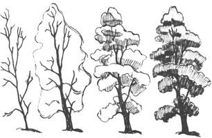 5. Последовательность в изображении дерева