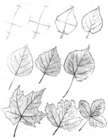 6. Последовательное построение формы листа