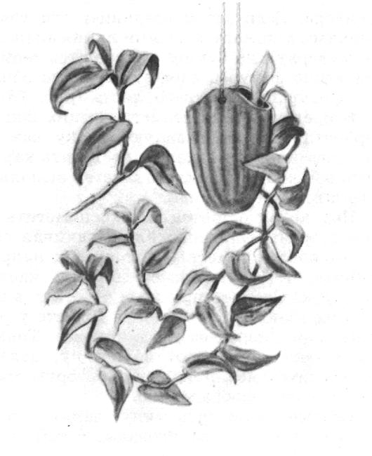 рисунки растений карандашом: