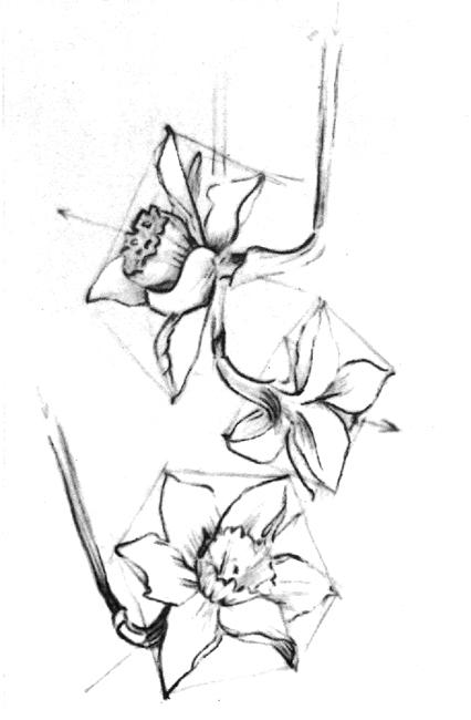 Нарисованные карандашом цветы