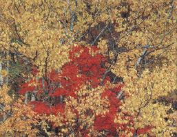 Фотографии Синдзо Маэда. Осенние краски. Префектура Фукусима, Япония. 1984