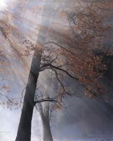 Фотографии Юсефа Ханфара. В горах Сьерра-Невады. Калифорния, США